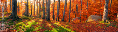 Aluminium Prints Autumn Beeches the rocks