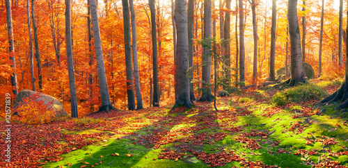 Aluminium Prints Autumn Beeches the rocks