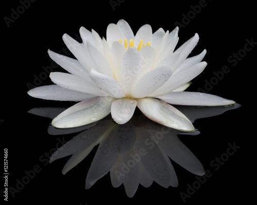 In de dag Waterlelies White Water Lily