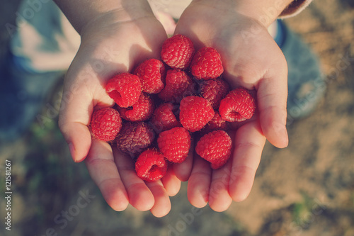 raspberries in the hands of a child Wallpaper Mural