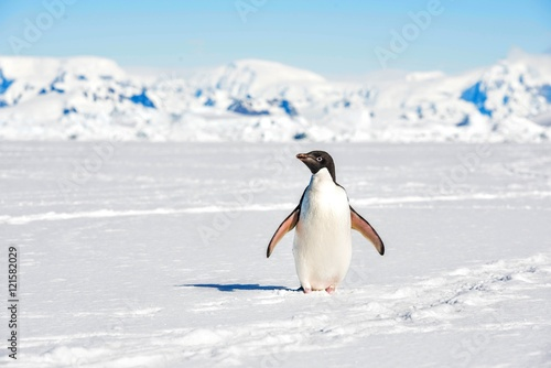 In de dag Pinguin Adelie Penguin