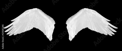 Foto  Bird wings isolated