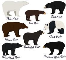 Different Species Of Bears Vec...