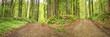 canvas print picture - Weg der Entscheidung - Waldweg