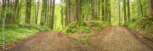 Fotografija  Weg der Entscheidung - Waldweg