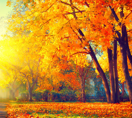 FototapetaAutumn. Fall nature scene. Beautiful autumnal park