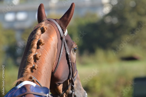 Fototapeta cheval de courses obraz