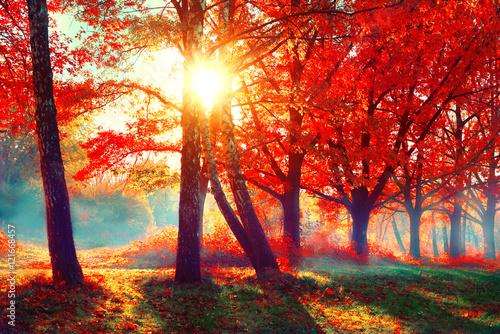 Foto op Canvas Herfst Autumn. Fall nature scene. Beautiful autumnal park