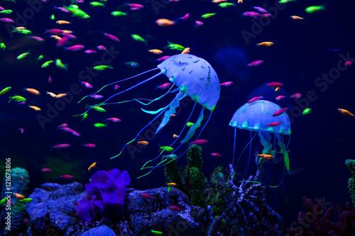 Fotografie, Obraz  Colorful fish and jellyfish.