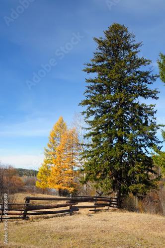 Foto op Plexiglas Landschappen autumn rural landscape