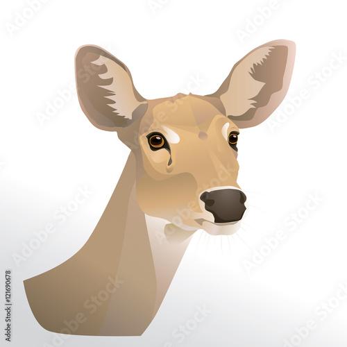 Fototapeta Vector illustration of deer  head portrait isolated on white background