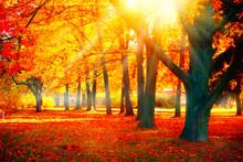 Autumn. Fall Nature Scene. Bea...