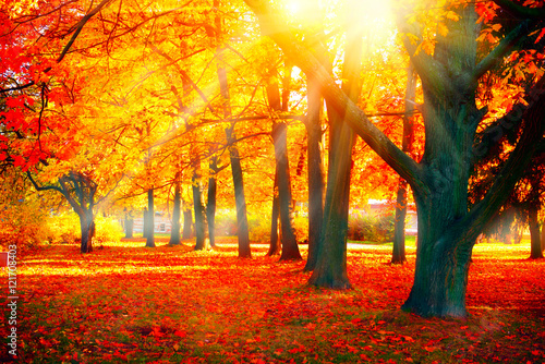 Foto op Aluminium Herfst Autumn. Fall nature scene. Beautiful autumnal park