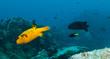 Various kind of boxfish in ocean