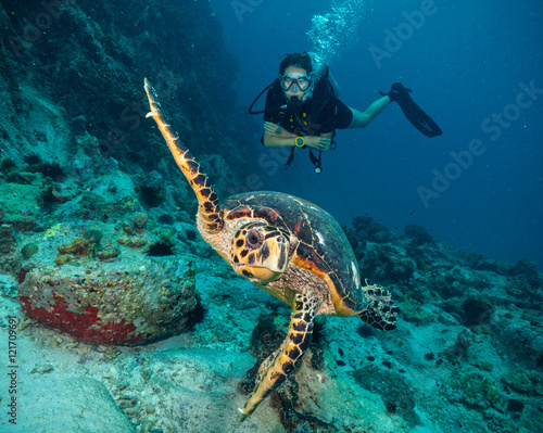 Scuba diver with Hawksbill turtle Wallpaper Mural