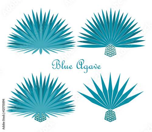 Blue agave or tequila agave plant. Vector set Wallpaper Mural