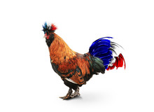 France, French Colored Rooster...