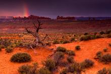 Light Of The Desert