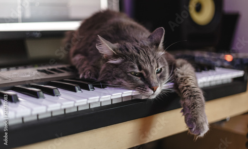 Foto op Aluminium Kat Chewie the cat has tired of making music