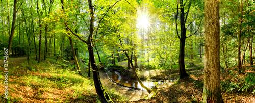 Polana w lesie ze strumykiem i słońcem