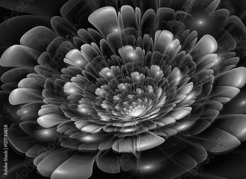 abstrakcjonistyczny-czarny-i-bialy-kwiat-z-blyska