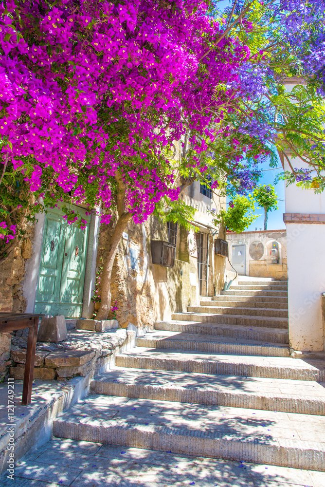 Street with flower of Capoliveri village in Elba island, Tuscany, Italy, Europe.