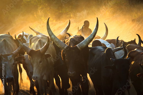 Staande foto Afrika cattle sunset in Africa