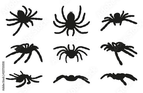 Fotografie, Obraz  Spiders Vector Silhouettes