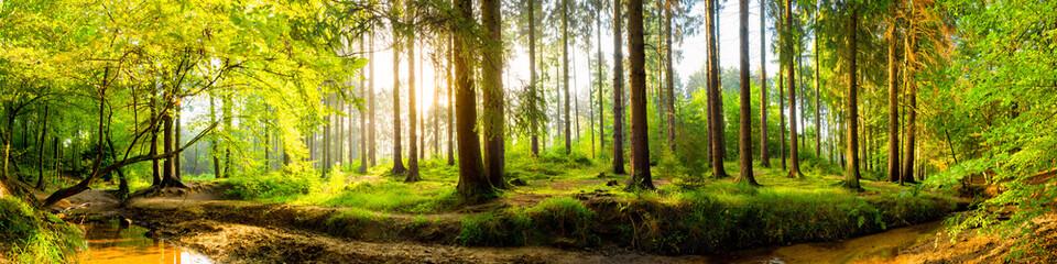 Idyllischer Wald mit Bach bei Sonnenaufgang