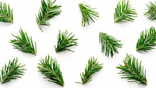 Christmas Background. Green Fir Sprig Branches On White Background. Pattern For Design