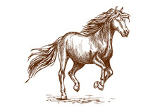 Running And Prancing Horse Sketch Portrait