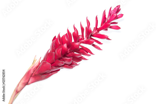 Fake Red cone ginger flower on white background Canvas Print