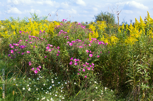 Fotografie, Obraz  Prairie wildflowers in Middlefork Savanna Forest Preserve in Lake County, Illino