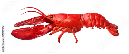 Poster Schaaldieren Lobster Side View