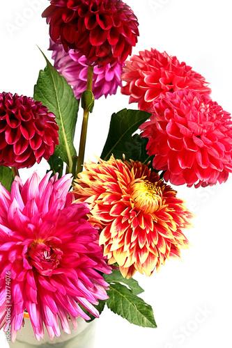 Poster Dahlia dahlia garden image as an element festive floral arrangements