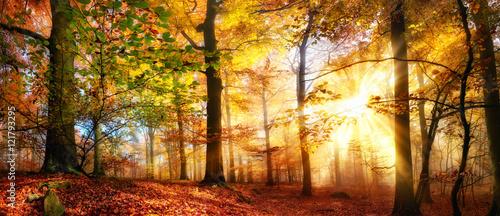Photo sur Toile Route dans la forêt Sonne scheint in einem bunten Wald im Herbst bei Nebel