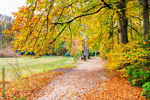 Canvas Prints Honey Dutch autumn landscape with footpath and beech trees