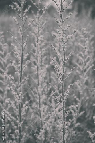 Textura de plantas secas otoñales en grises