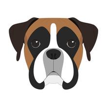 Boxer Dog Isolated On White Ba...