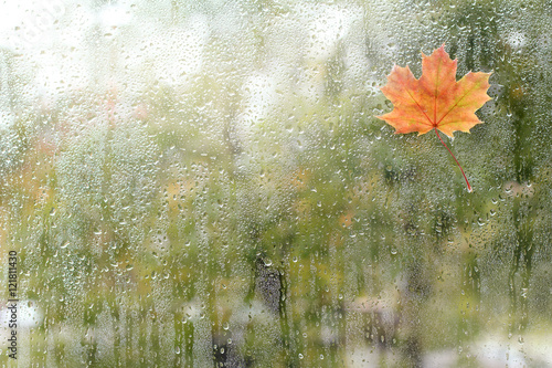 rainy autumn weather outside/ small maple leaf has stuck to the
