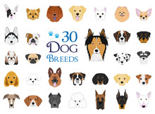Dog Breeds Vector Collection: Set Of 30 Different Dog Breeds In Cartoon Style