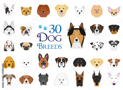 Fényképezés  Dog breeds Vector Collection: Set of 30 different dog breeds in cartoon style