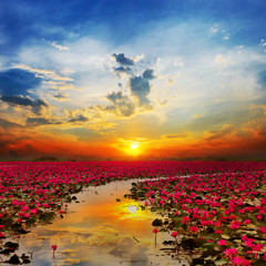 Fototapeta Japoński Sunshine rising lotus flower in Thailand