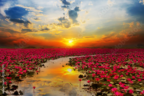 Foto op Aluminium Lotusbloem Sunshine rising lotus flower in Thailand