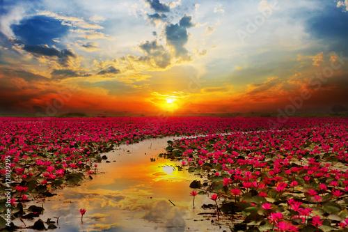 Foto op Canvas Lotusbloem Sunshine rising lotus flower in Thailand