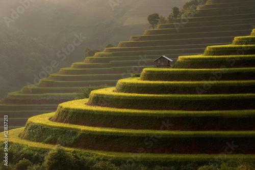 Garden Poster Rice fields Rice fields Mu Cang Chai, Vietnam