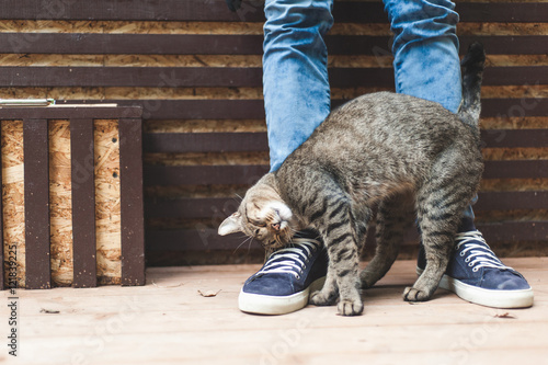 Keuken foto achterwand Kat Striped gray cat caressing at male legs