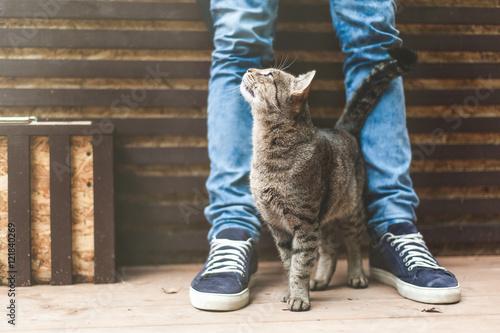 Keuken foto achterwand Kat Striped gray cat rubbing against male legs