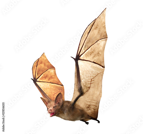 Fotografie, Obraz  Flying Vampire bat isolated on white background