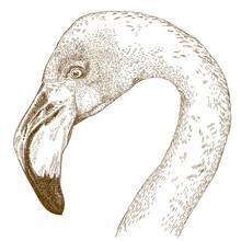 Engraving  Illustration Of Flamingo Head